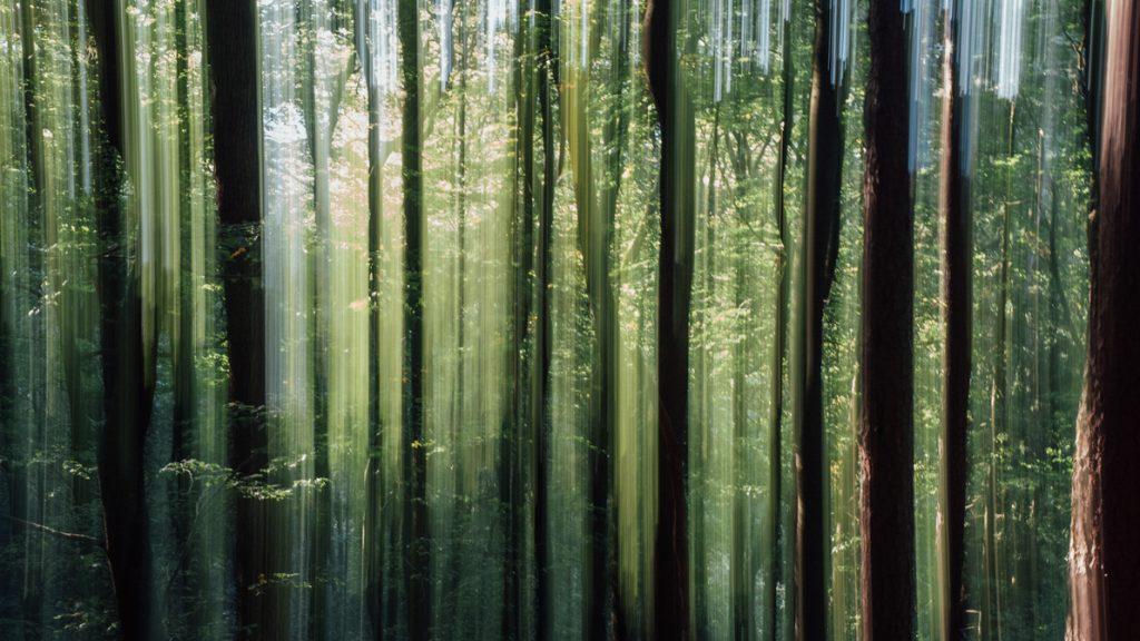 Nachhaltigkeit. Bild: dioxin/photocase.de